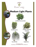 Medium Light Plants
