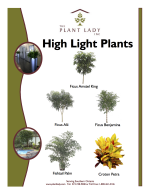 High Light Plants